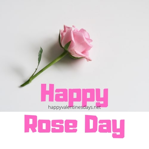 rose-day-2020-hd-images