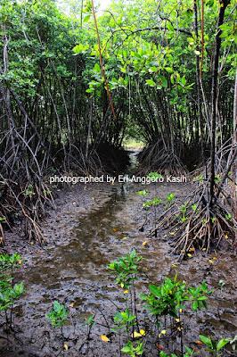 Lantai hutan mangrove memiliki ekosistem yang khas.