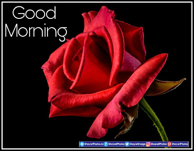 Good Morning Images for whatsapp facebook