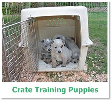 crate training,crate training a puppy,puppy crate training,crate training a dog,crate training a puppy crying,crate training a puppy at night,how to crate train a puppy,puppy training,dog training,crate training a puppy while at work,crate,puppies,training,how to crate train,crate training puppies at night,how to crate train a puppy at night,crate training for puppies while working,crate training puppy at night,crate training a puppy cesar millan,how to crate train a dog