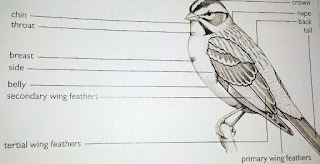 all parts of a bird