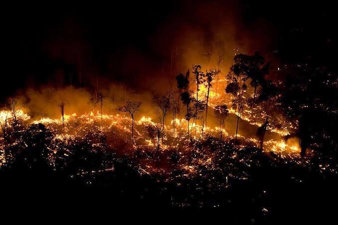 Meio Ambiente: 'Histeria injustificada', diz chefe de embaixada sobre a Amazônia