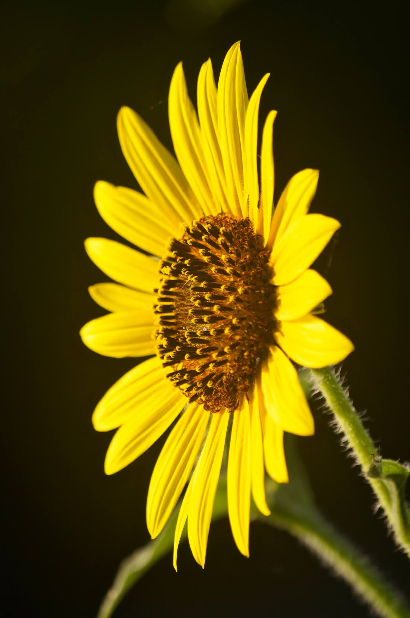Type-of-shot bunga matahari berupa medium-shot