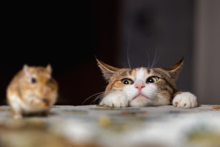 L'alimentazione del gatto con cibo umido e secco