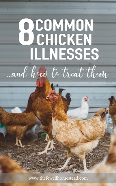 Common Chicken Diseases and Treatment