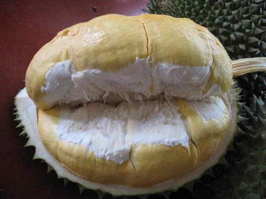 Bibit Durian Montong Hasil Okulasi Jawa Tengah