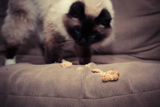 Hairballs in Cats – How Horrible Can They Be?