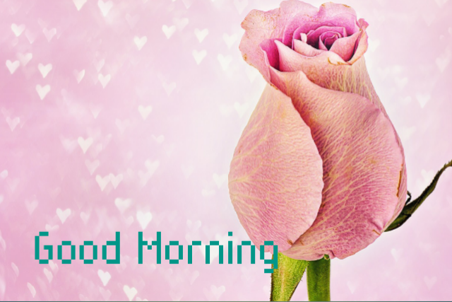 Good morning love rose image download