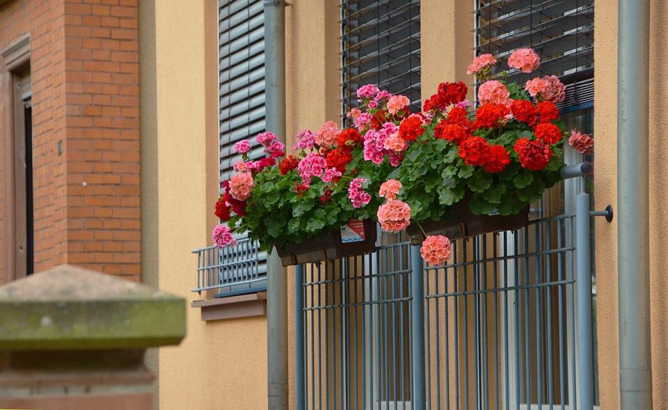 Las 10 plantas m s resistentes al sol y al calor amigos for Jardines caseros bonitos