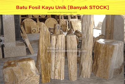 batu fosil kayu kelor panjang