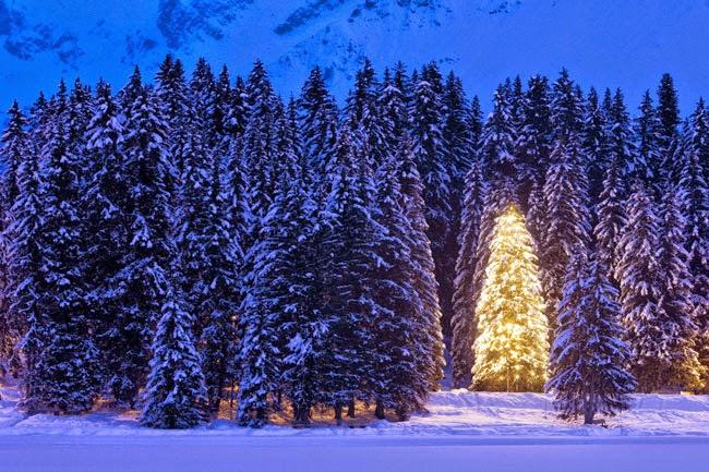 need Chritsmas tree for Christmas