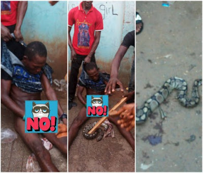 Thief who makes his snake swallow his loot, arrested in Benin