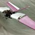 Ρομποτικό γεράκι κατά πτηνών για τα αεροδρόμια!