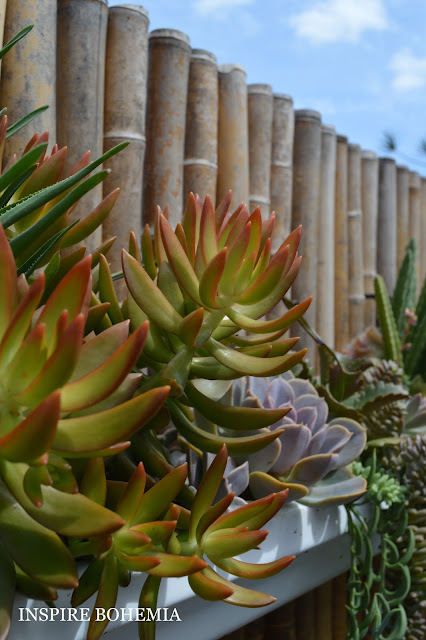 Cactus and Succulent Rain Gutter Fence Planters by Inspire Bohemia - Miami/Ft. Lauderdale - drought tolerant planter - suspended hanging planters