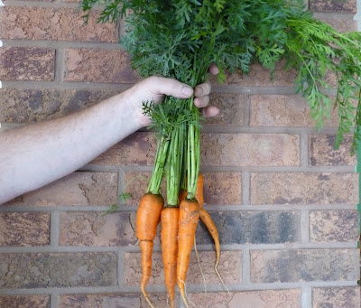 Mr Ferdzy lends a hand with Flakkee Carrots