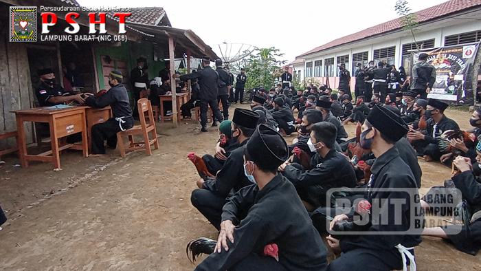 Tes Ayam Siswa PSHT Ranting Air Hitam Cabang Lampung Barat