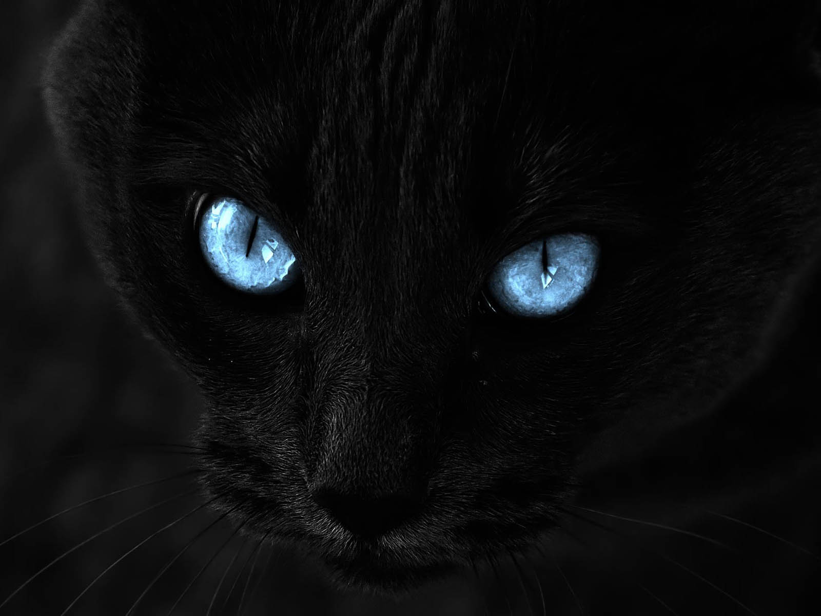 Black Cat Eyes Wallpaper: Wallpaper: Black Cat Blue Eyes