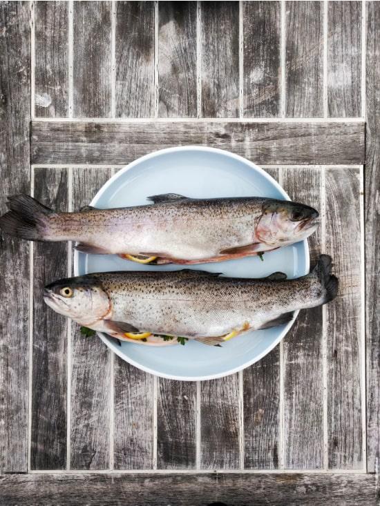 fish free photo