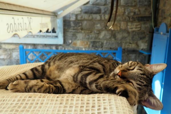 cats Porto Venere