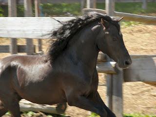 Ponygeschichte