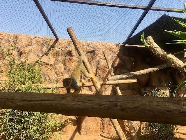 Monkey-park-los-cristianos-monkeying-around