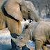Gajah dan Badak Terancam Punah, Sinyal Bahaya untuk Bumi