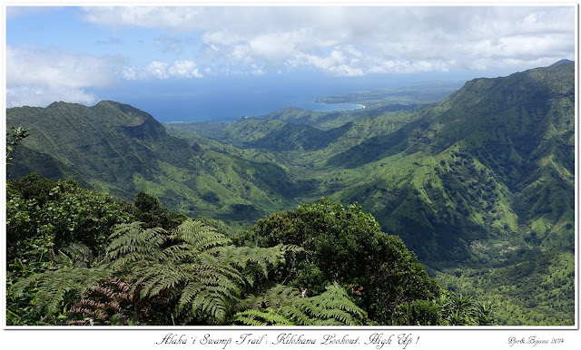 Alaka'i  Swamp Trail: Kilohana Lookout. High Up!