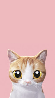 cat pink wallpaper for android