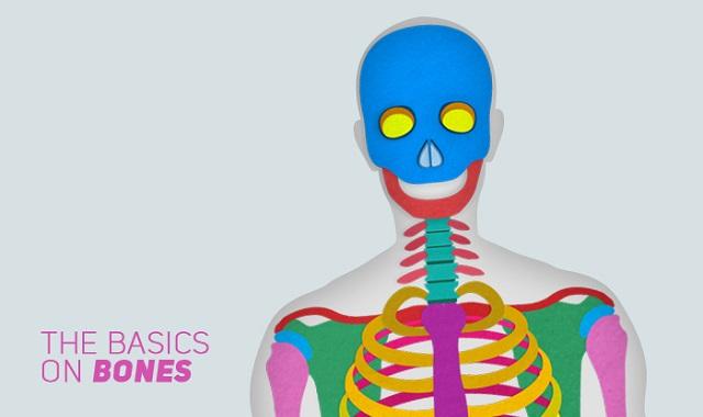 The Basics on Bones #infographic