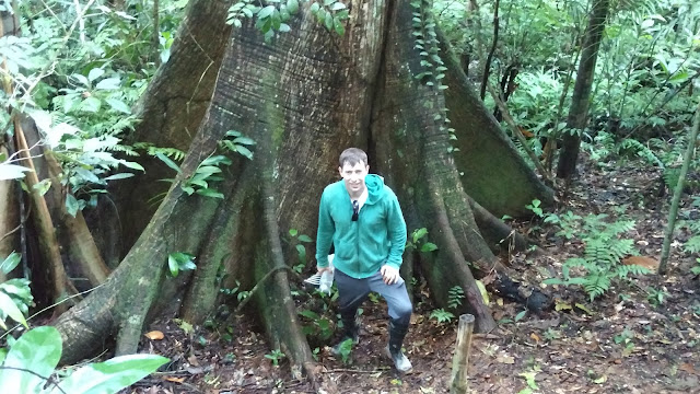giant tree- Tombopato Reserve, Peru