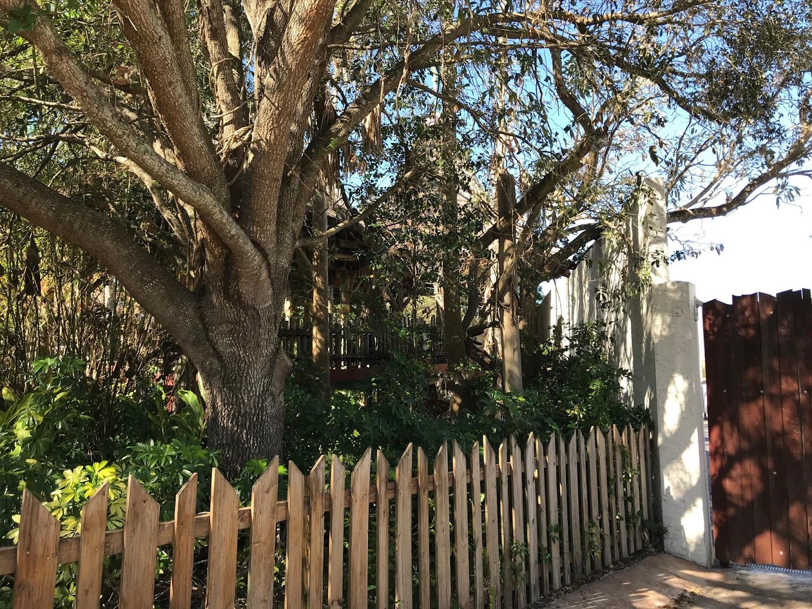 Gwazi- Busch Gardens Tampa