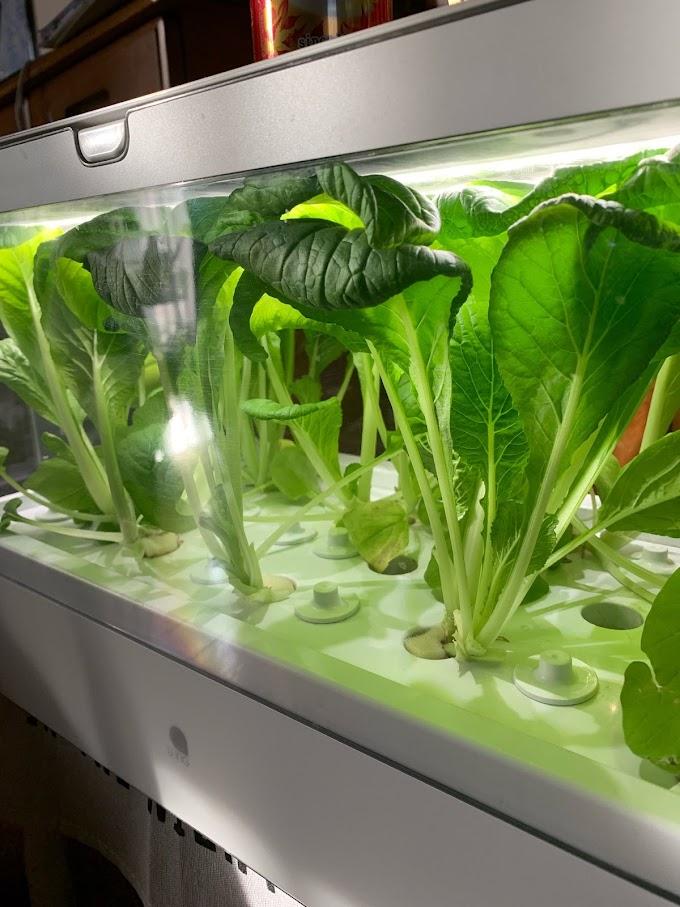 【まとめ】9月に栽培している野菜たちをまとめてみた