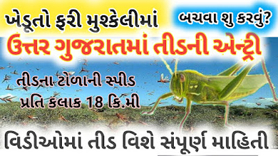 Now tidanum had invaded the border area patum north Gujarat on farmers