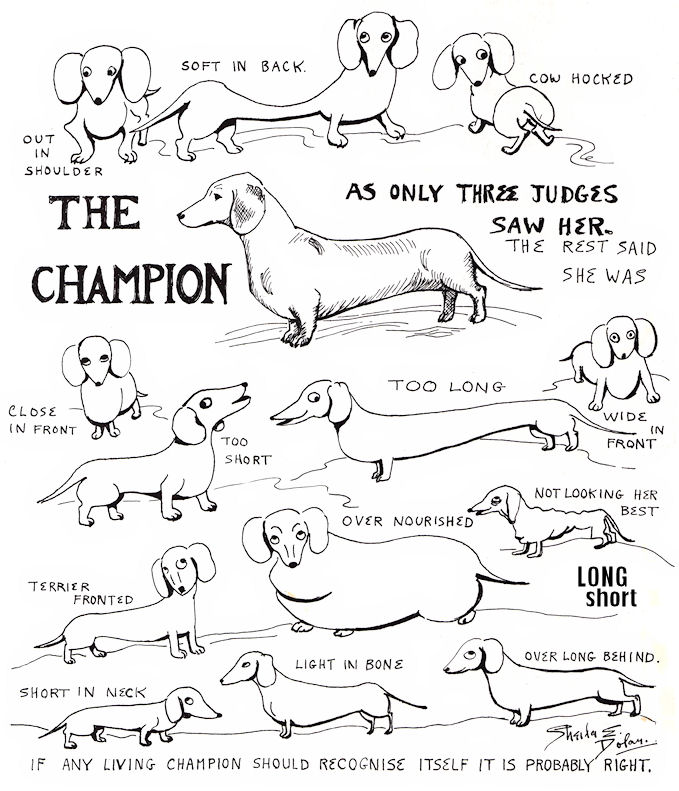 The Long And Short Of It All A Dachshund Dog News Magazine Friday