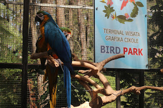 bird park terminal wisata grafika cikole