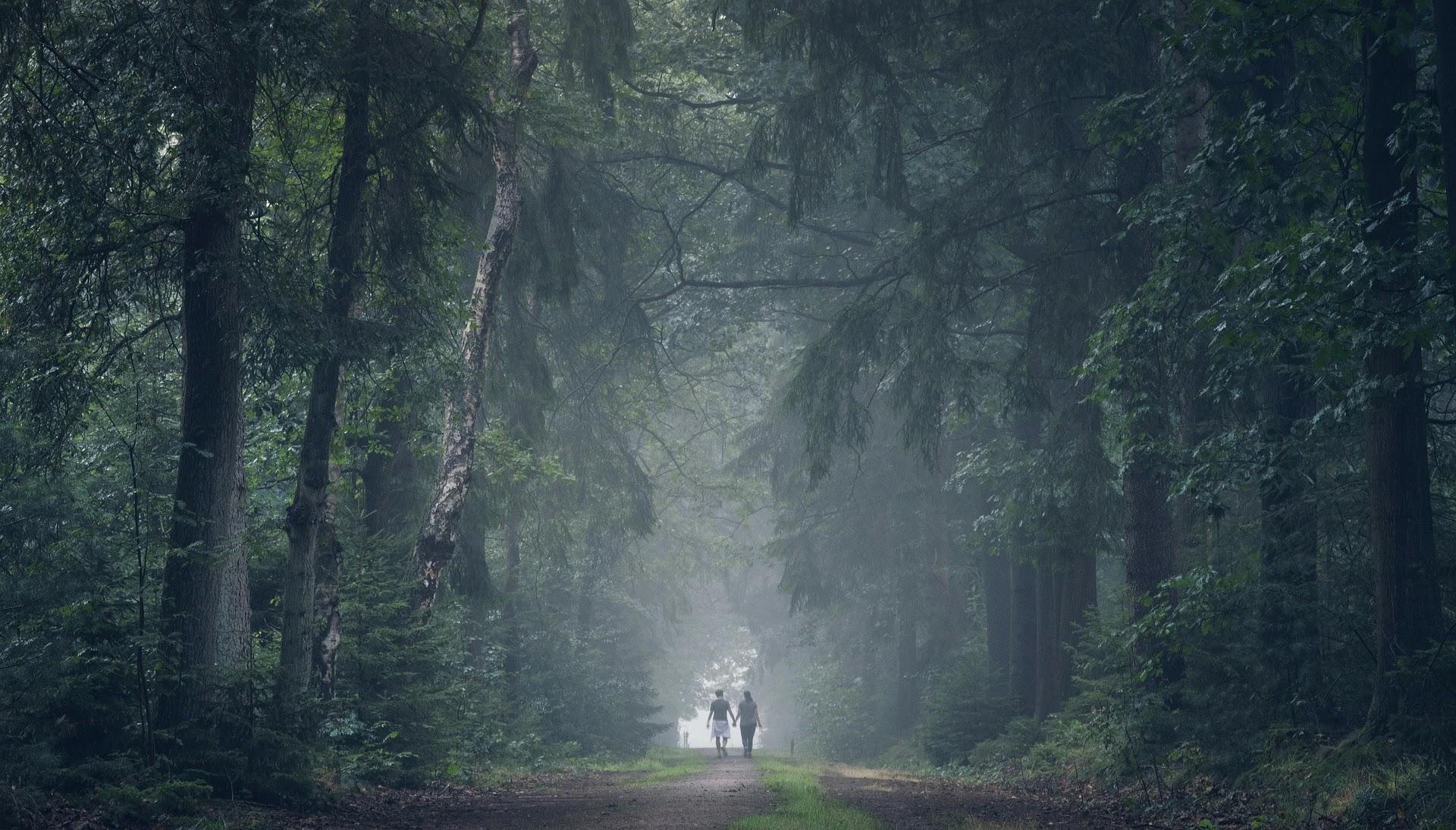 صورة غابات واشجار عملاقة