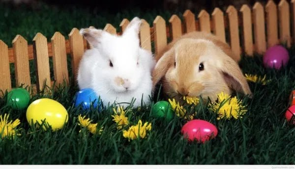 Happy Easter Cute Rabbit Images 2020