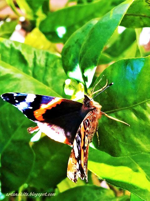 E hoje, a inspiração... pertence a quem nos faz sonhar... nas asas do seu poético voar... / And today, the inspiration... belongs to those who makes us dream... on the wings of their poetic flying...