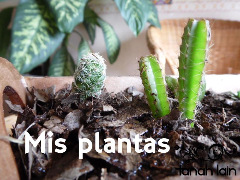 Mis plantas de sol y sombra