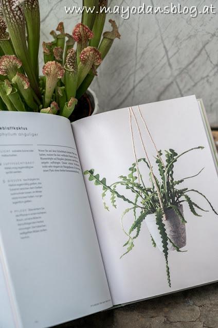 Pflegeleichte Zimmerpflanzen für jedermann