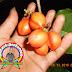 Nikmat dan Kaya Manfaat Kacang Amazon