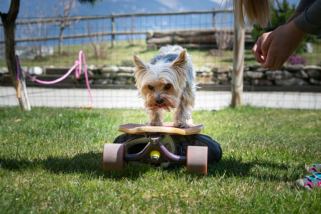 pet training business ideas for animal lovers