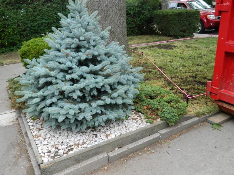 Garden Muses: Not Another Toronto Gardening Blog : 01/08/16