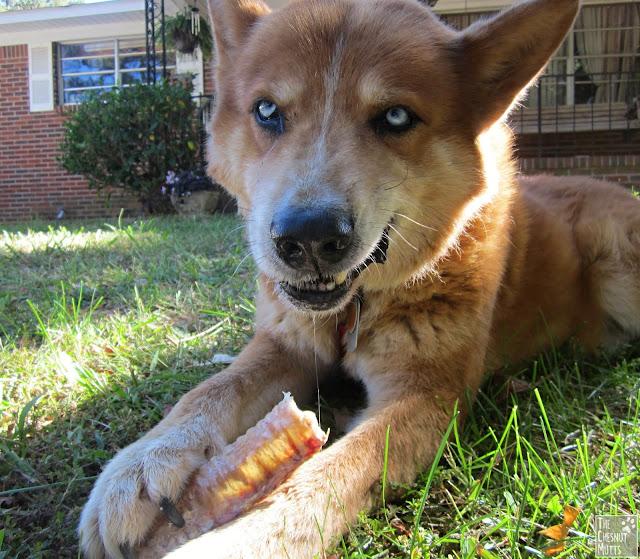 BestBullySticks.com trachea dog chew