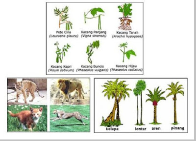 Keanekaragaman Hayati Tingkat Spesies - pustakapengetahuan.com