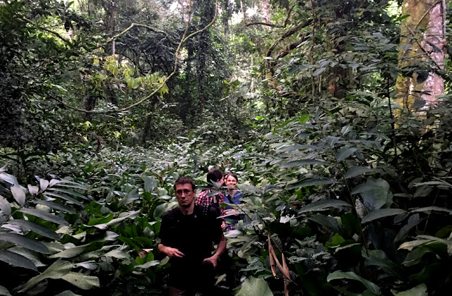 Uganda las tropikalny