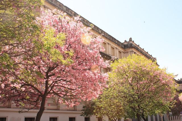 Primavera em Córdoba