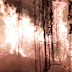 Declaran Alerta Roja en Chanco por incendio que amenaza parque Federico Albert