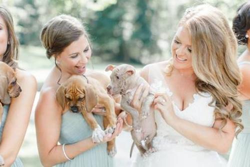 cachorrinhos%2Badotados%2Bapenas%2Btr%25C3%25AAs%2Bpalavras%2Bsim%2Beu%2Baceito%2B%25283%2529 - Shelter Puppies Are the Best 'Bouquets' for This Bridal Party - Photos Unlimited