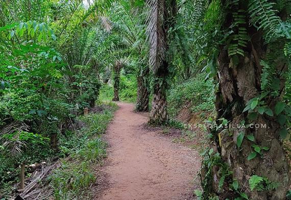 Hiking at Bukit Taisho Bahau